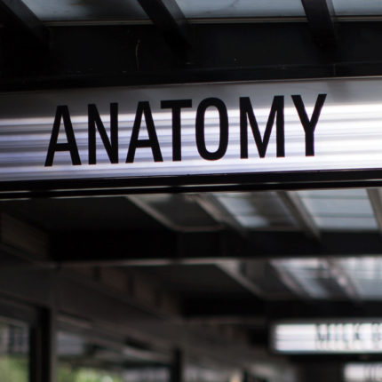 Anatomy design in Johannesburg